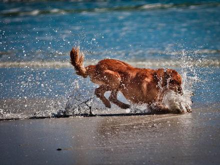 Обои Собака играется на берегу моря