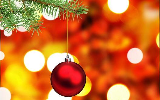 Обои Красный шар висит на елочной ветке