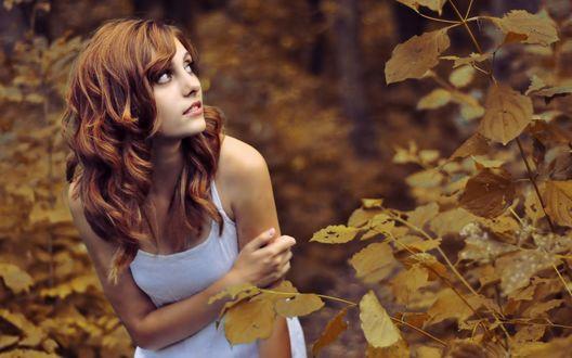Обои Рыжеволосая девушка в осеннем лесу