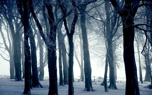 Обои Тёмный зимний лес усыпанный снегом