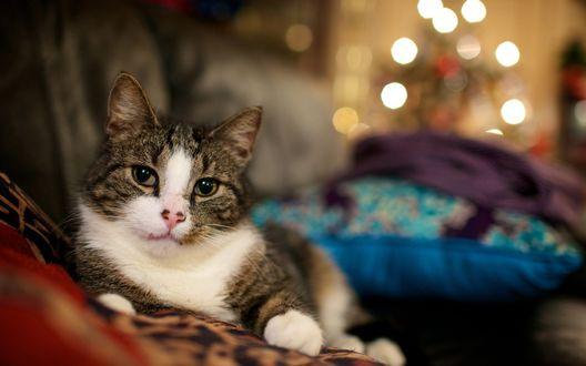 Обои Кот и огоньки новогодней ёлки в глубине комнаты на заднем плане
