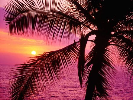 Обои Пальмы, солнце заходит за море