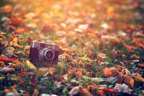 Обои Фотоаппарат лежит в осенних листьях