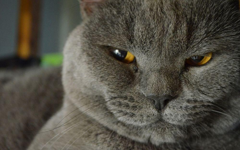 Днем рождения, смешные котики серый