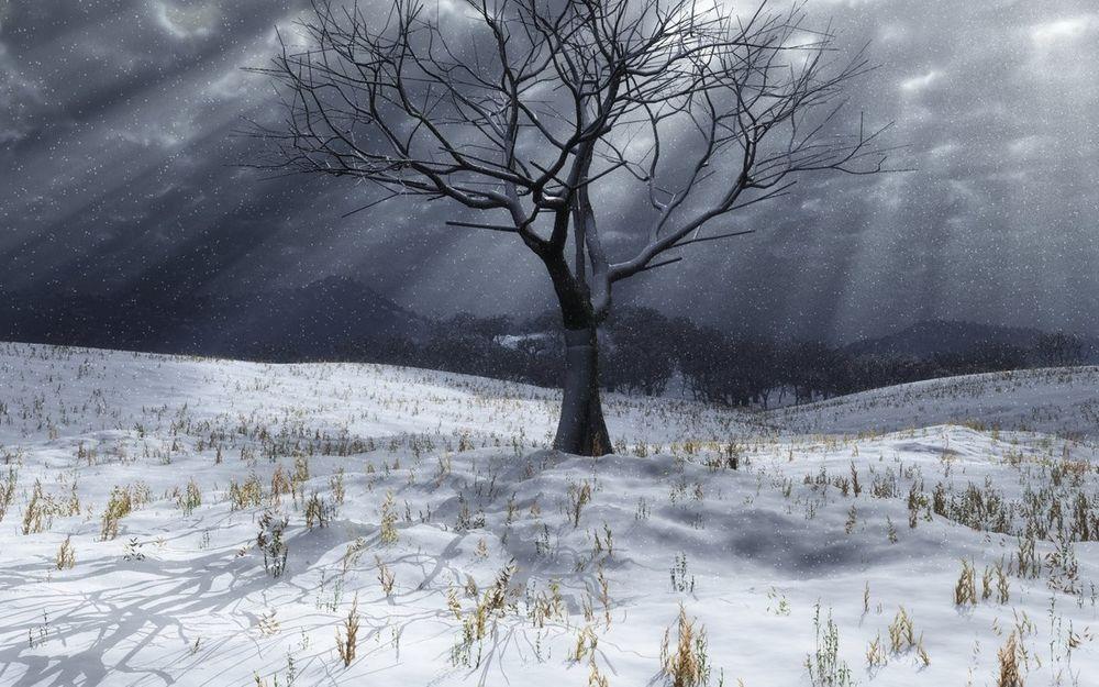 Обои для рабочего стола Серое дерево без листьев на фоне заснеженного поля, пасмурного неба, под снегом