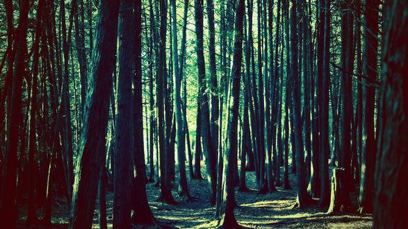 Обои Дремучий лес, освещённый лучами солнца