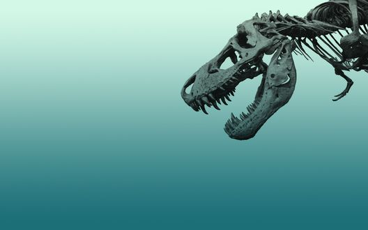 Обои Скелет динозавра