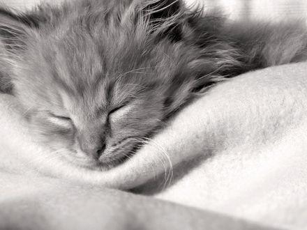 Обои Очаровательный серый котенок сладко спит на мягком покрывале