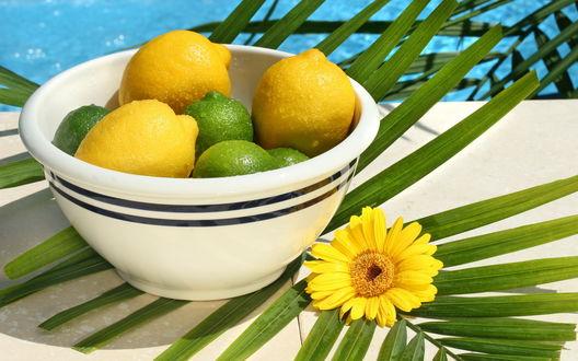Обои Лайм и лимоны в миске стоящей на ветке пальмы