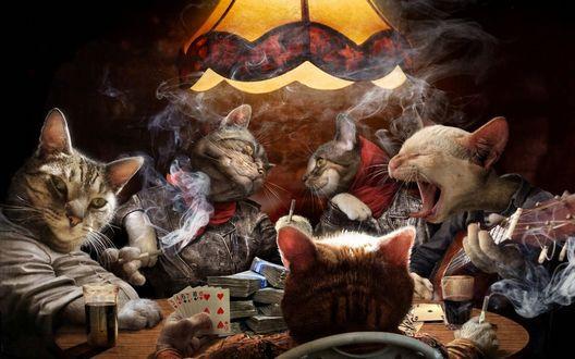 Обои Коты сидят в комнате и веселятся:играют на гитаре и в карты на деньги