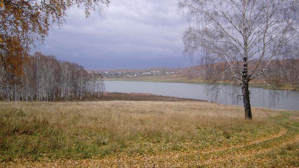 Обои Осенний пейзаж - голые берёзки без листвы, пожухлая трава
