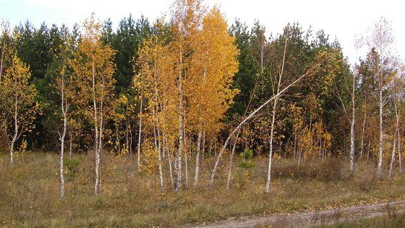 Обои Просёлочная дорожка проходит по смешанному лесу, пахнет осенью
