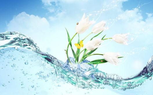 Обои Цветы во льду и воде с насекомыми