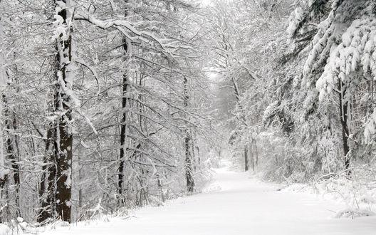 Обои Тропинка в зимнем снежном лесу