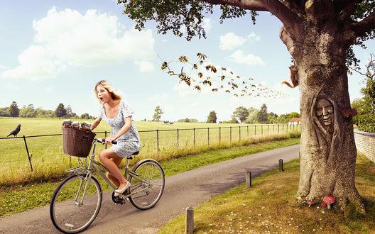Обои Девушка на велосипеде мчится по дороге мимо поля, пытаяся оторваться от роя ос
