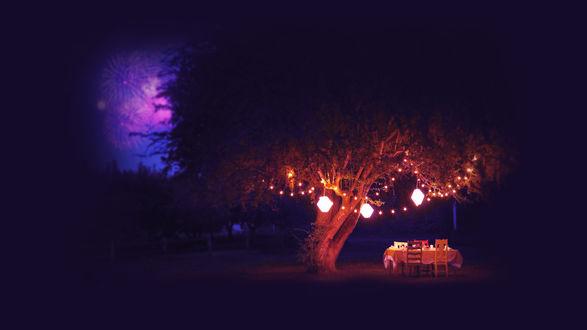 Обои Романтический ужин у дерева ночью