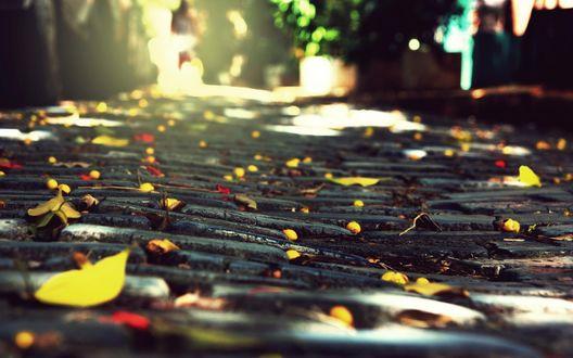 Обои Брусчатка усыпана осенней листвой