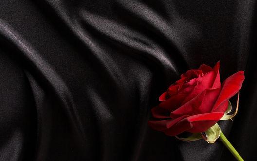 Обои Красная роза на черной ткани