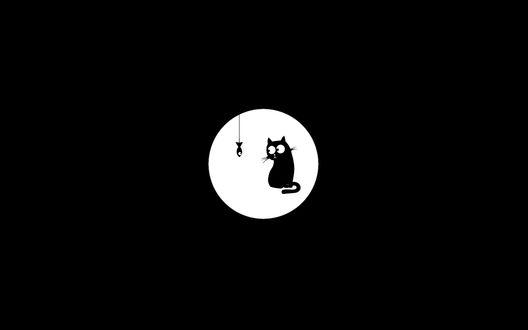 Обои Чёрный кот смотрит на рыбу на веревочке