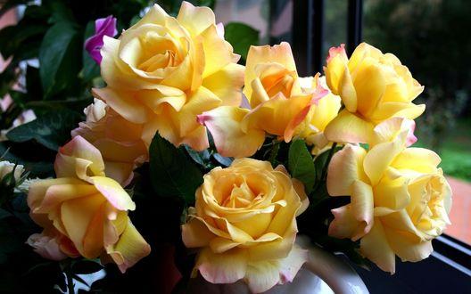 Обои Красивые жёлтые розы в букете