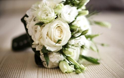 картинки белых цветов: