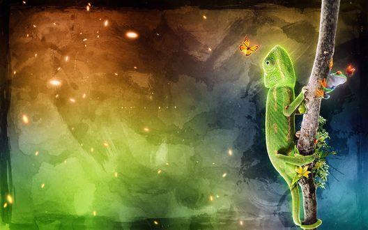 Обои Хамелеон на пару с лягушкой ловят бабочек на завтрак