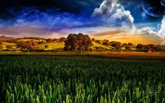 Обои Сказочное зеленое поле под синим небом (11.11.11. Andrea Andrade)