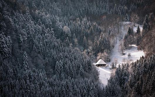 Обои Домик среди густого зимнего леса