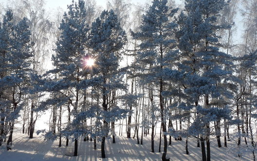 Обои Солнце пробивается через снежный лес