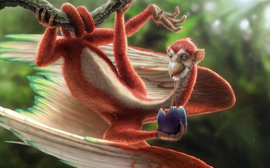 Обои Существо похожее и на обезьяну и на птицу висит на ветке и кушает ягоду