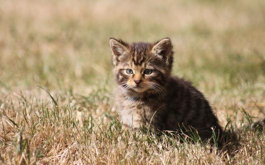 Обои Милый кототёнок сидит в траве