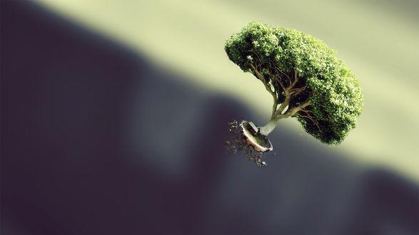 Обои Выкорчеванное с корнем дерево у маленького домика в полете