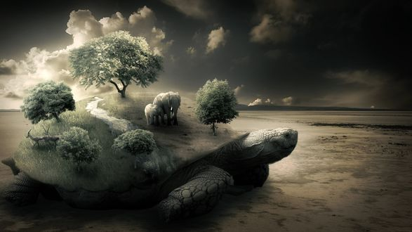 Обои На черепахе развивается новый мир, растут деревья, гуляют слоны