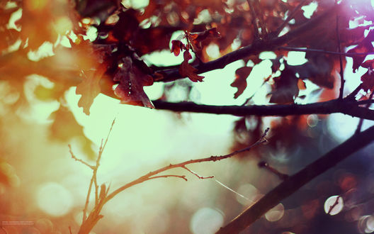 Обои Красные листья осени