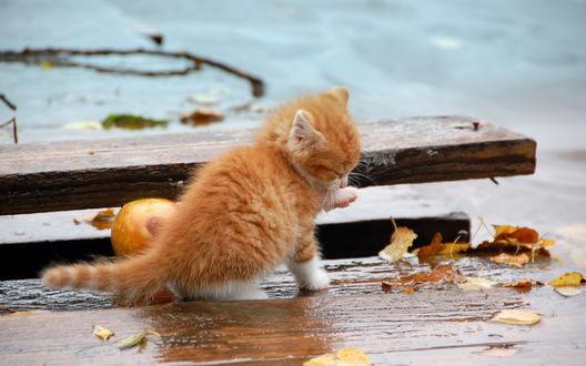 Обои Одинокий котёнок бродит по мокрым улицам