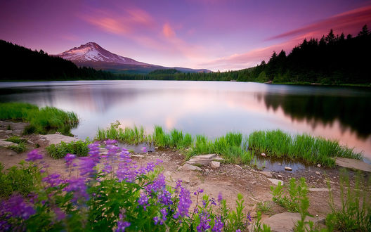 Обои Горное озеро и растущие на берегу сиреневые цветочки под тяжелым лиловым небом