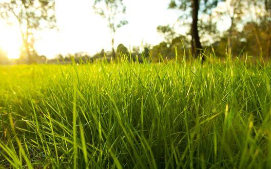 Обои Зеленая трава под лучами утреннего солнца