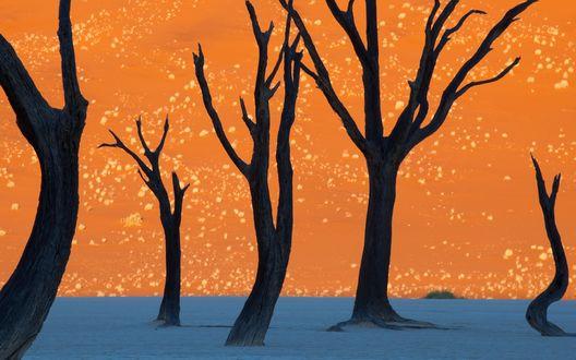Обои Глиняное плато Соссуфлей в пустыня Намиб, известное самыми большими в мире красными песчаными дюнами