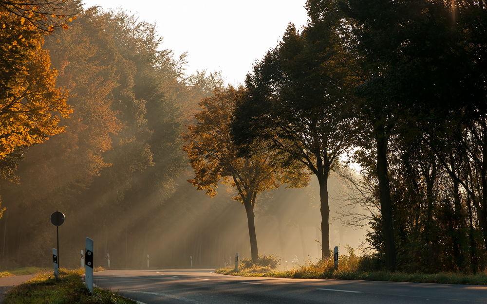 Обои для рабочего стола Дорога в лесу под лучами утреннего солнца