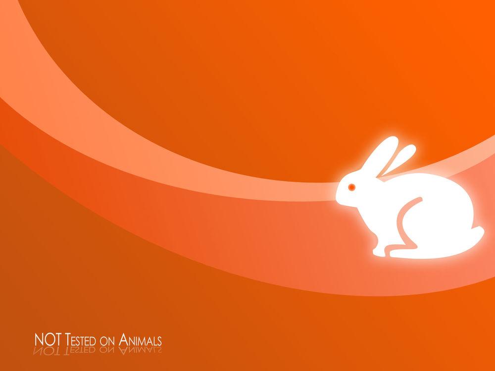 Обои для рабочего стола Кролик на оранжевом фоне и надпись NOT Tested on Animals