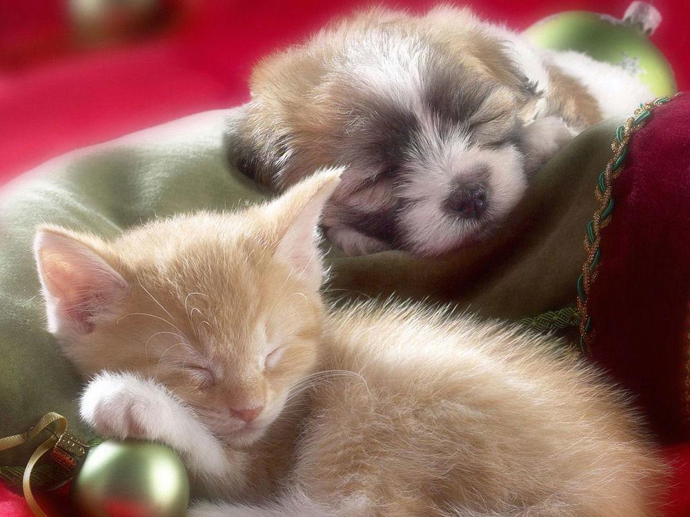 Мороз картинки, новогодние картинки котенок и щенок