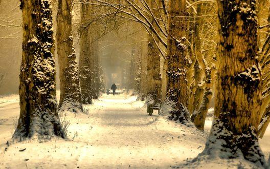 Обои Зимняя аллея по которой идут люди