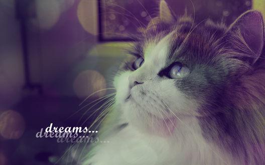 Обои Кот поднял голову в верх (dreams/ мечты)