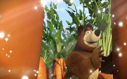 Обои Медведь собирает урожай моркови - м/ф Маша и Медведь