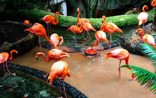 Обои Фламинго в зоопарке