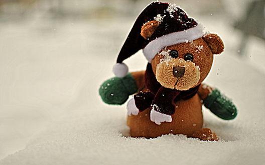 Обои Игрушечный медведь в шапочке сидит в снегу