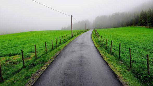 Обои Дорога посреди зеленого луга ведущая в туманный лес