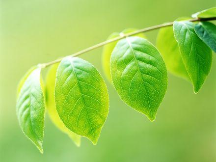 Обои Весна, растет молоденькая травка, и уже появились первые зеленые листья на деревьях