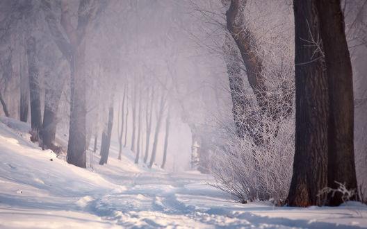 Обои Лес зимой