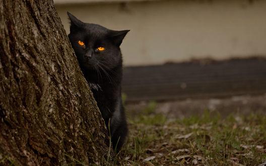 Обои Чёрный кот спрятался за дерево